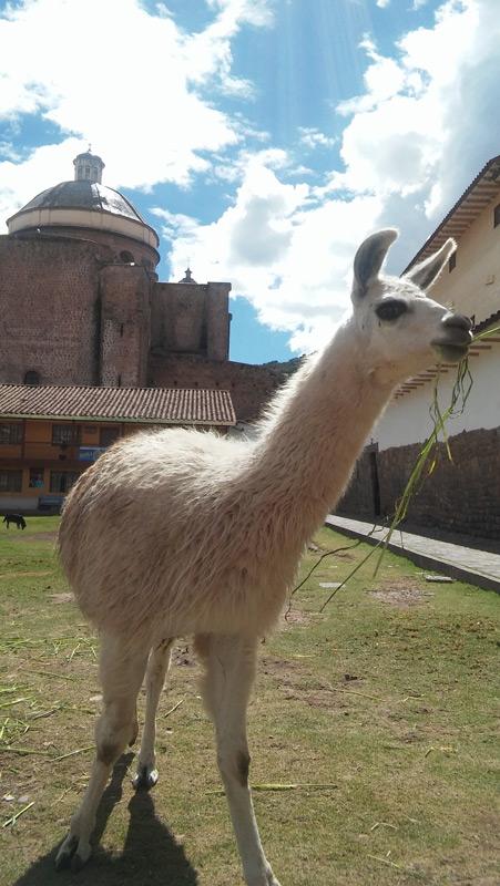 cusco_llama
