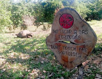 No Tocar Las Tortugas signage