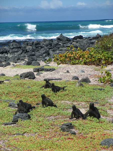 galapagos_wildlife04