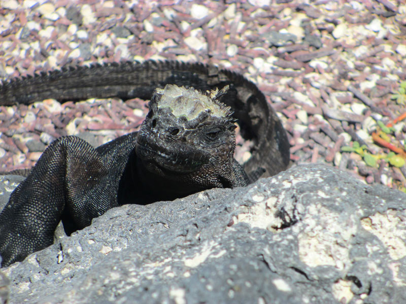 galapagos_wildlife05