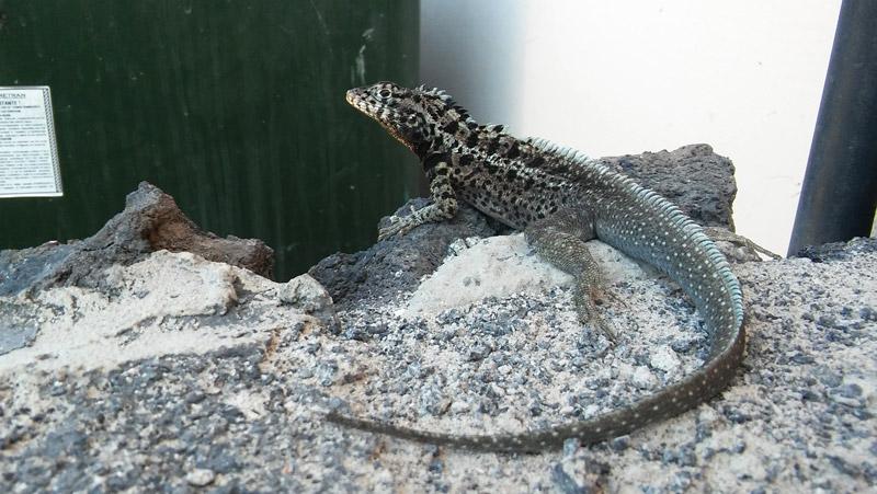 galapagos_wildlife13a