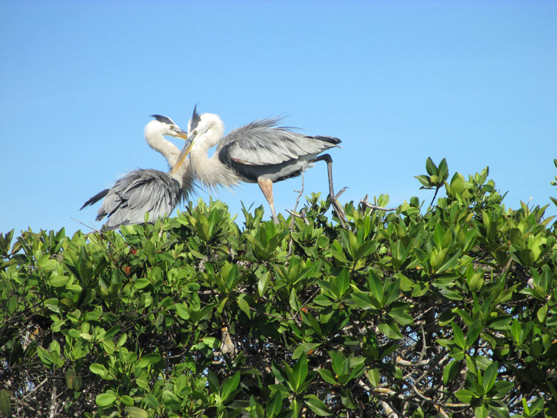 galapagos_wildlife19