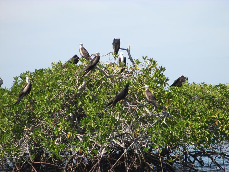 galapagos_wildlife22