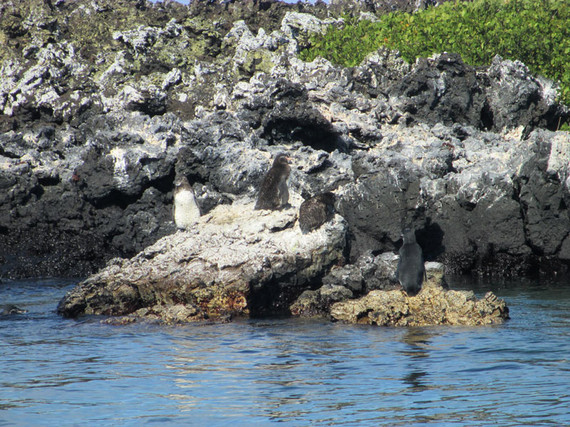 galapagos_wildlife26