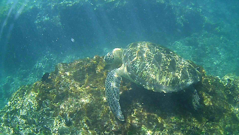 galapagos_wildlife32