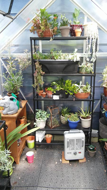 greenhouse_2a